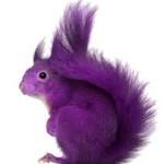 squirel color